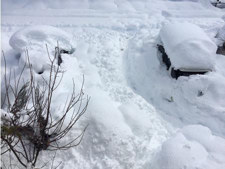 2014年2月14日、大雪!