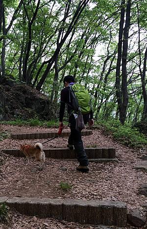 柴犬さくらと湯村山へトレッキング