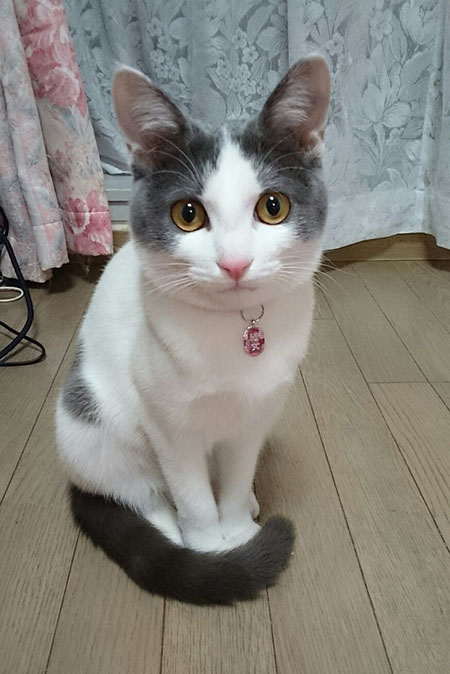 結女ちゃん♪迷子札・・・小判(手彫り)