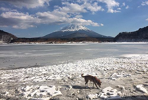 2018年2月4日、精進湖、全面結氷